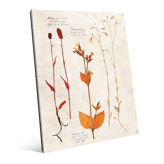 Dry Floral Specimens' Glass Wall Art