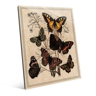 Butterfly Drawing Acrylic Wall Art