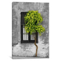 iCanvas Tree in Front of Window Green Pop Color Pop by Panoramic Images Canvas Print