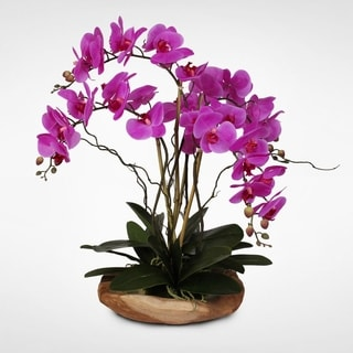 Real Touch Phalaenopsis Silk Orchid with Curly Willow and Succulents in Natural Teak Wood Bowl