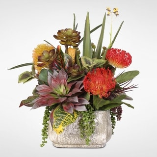 Tillandsia & Aloe Succulents With Dancing Orchid Spray in Stone Pot