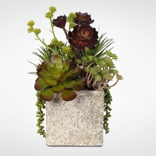 Succulent, Hen, and Chicks Coastal Cottage Arrangement in Stone Pot