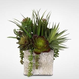 Coastal Cottage Succulent and Vanilla Grass Arrangement with Stone Pot