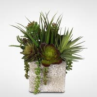 Coastal Cottage Succulent and Vanilla Grass Arrangement with Stone Pot