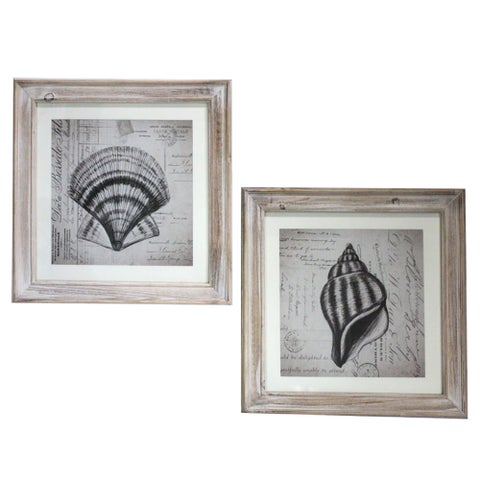 Coastal Collection 2-Piece Sea Shells Square-framed Wall Art