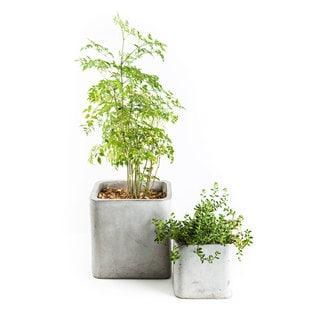 Eco-concrete Granada Planter (Viet Nam)