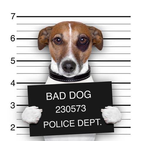 Cortesi Home 'Bad Dog' Tempered Glass 12-inch x 16-inch Frameless Wall Art