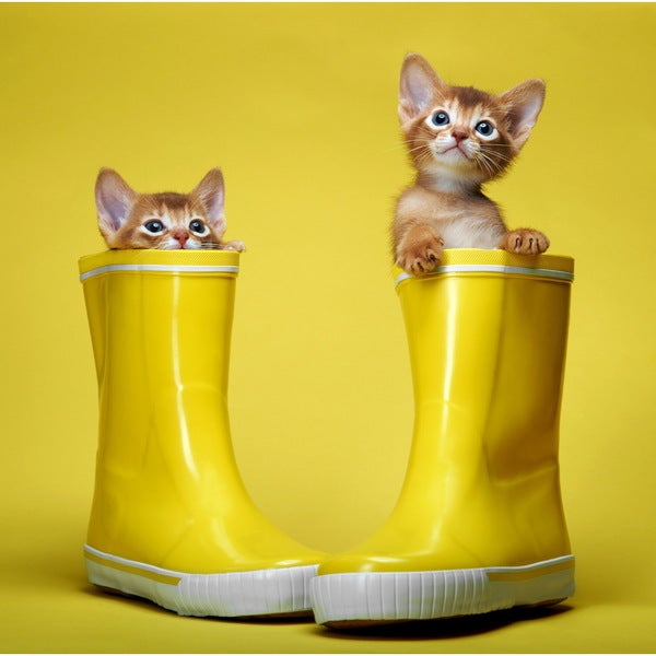 Cortesi Home 'Puss in Boots' Tempered Glass Wall Art - Yellow