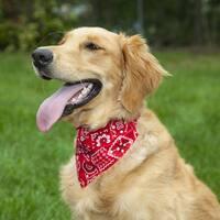 LucyBelle Cotton and Nylon Bandana Dog Collar