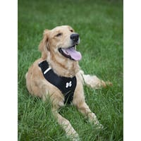 LucyBelle Pets Nylon Mesh Comfort Padded Pet Harness and Lead