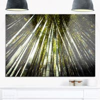 Long Bamboos in Bamboo Forest - Forest Glossy Metal Wall Art