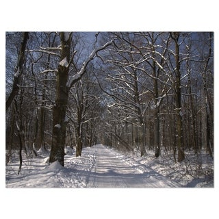 Path on Sunny Winter Day in Park - Modern Forest Glossy Metal Wall Art