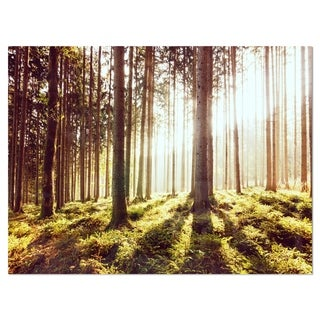 Early Morning Shadows of Forest - Large Forest Glossy Metal Wall Art