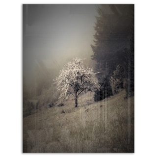 Apple Tree Vintage Style - Landscape Photo Glossy Metal Wall Art