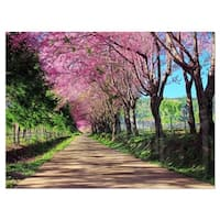 Cherry Blossom Pathway in Chiang Mai - Landscape Glossy Metal Wall Art