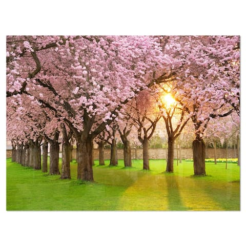 Fascinating Springtime Cherry Scenery - Landscape Glossy Metal Wall Art