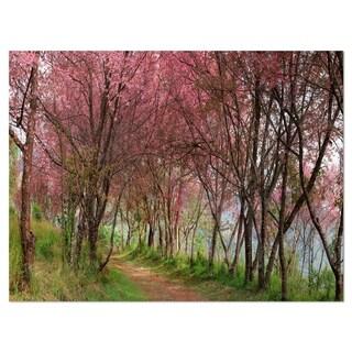 Sakura Pink Flowers in Thailand - Landscape Glossy Metal Wall Art