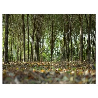 Dense Rubber Tree Plantation - Landscape Glossy Metal Wall Art