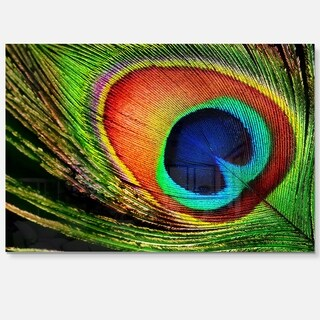 Peacock Feather - Photography Glossy Metal Wall Art
