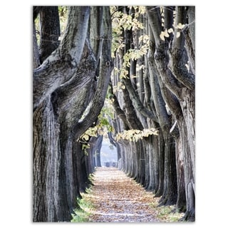 Tree Outside Lucca Italy - Landscape Photo Glossy Metal Wall Art