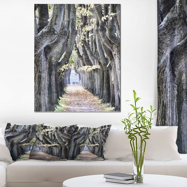 Tree Outside Lucca Italy Landscape Photo Glossy Metal Wall Art Overstock 12779922