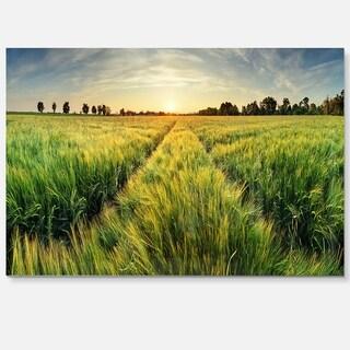 Green Wheat Field at Sunset - Landscape Photo Glossy Metal Wall Art