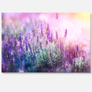 Growing and Blooming Lavender - Floral Photo Glossy Metal Wall Art