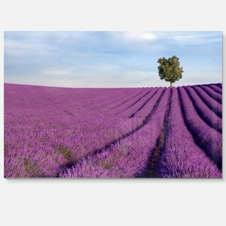 Lavender Field with Solitary Tree - Landscape Photo Glossy Metal Wall Art