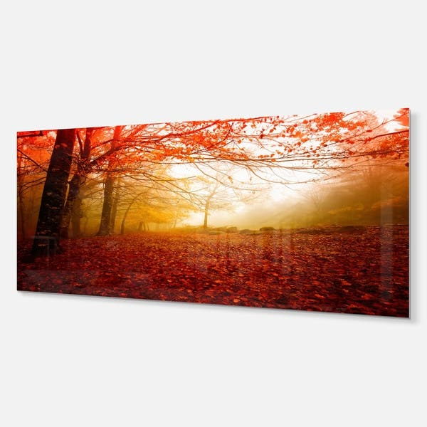 Yellow Sun Rays In Red Forest Landscape Photo Glossy Metal Wall Art On Sale Overstock 12780365