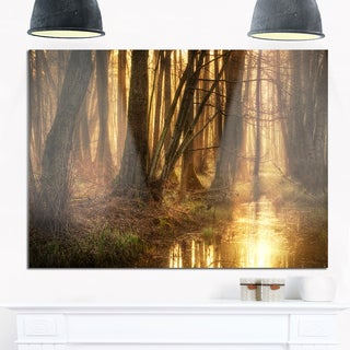 Golden Morning in Dense Forest - Landscape Photo Glossy Metal Wall Art