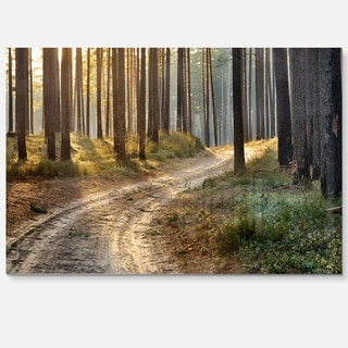 Road in Thick Morning Forest - Landscape Photo Glossy Metal Wall Art