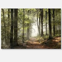 Green Fall Forest with Sun Rays - Landscape Photo Glossy Metal Wall Art