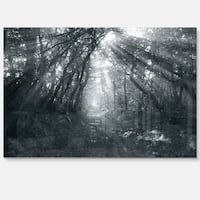 Sun Rays Through Gray Trees - Landscape Photo Glossy Metal Wall Art