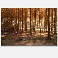 Thick Fall Forest with Orange Leaves - Landscape Photo Glossy Metal Wall Art