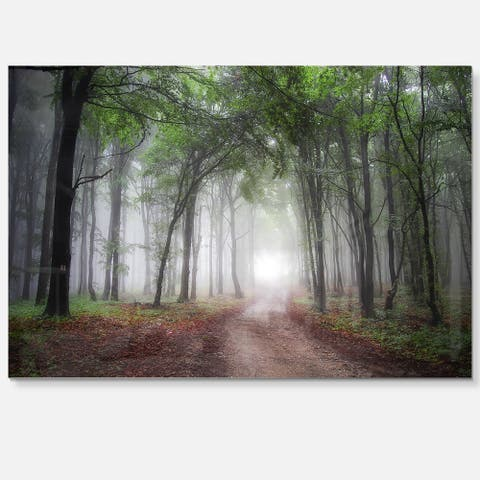 Light Through Green Fall Forest - Landscape Photo Glossy Metal Wall Art
