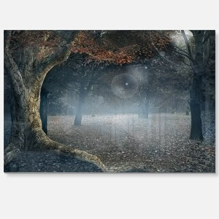 Big Trees in Dark Foggy Forest - Landscape Photo Glossy Metal Wall Art