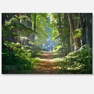Bright Green Forest in Morning - Landscape Photo Glossy Metal Wall Art