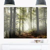 Light in Dense Fall Forest with Fog - Landscape Glossy Metal Wall Art