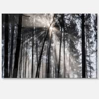 Sunbeams through Black White Forest - Forest Glossy Metal Wall Art