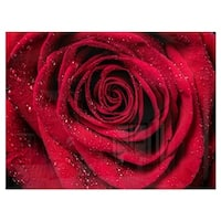 Red Rose Petals with Rain Droplets - Floral Glossy Metal Wall Art