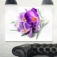 Bunch of Blooming Crocus Flowers - Large Floral Glossy Metal Wall Art