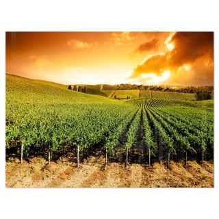Sunset Vineyard Panorama - Extra Large Glossy Metal Wall Art Landscape