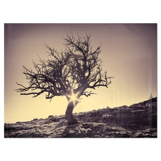 Lonely Grey Tree in Mountain - Extra Large Glossy Metal Wall Art Landscape
