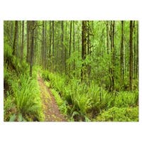 Lush Forest Path Columbia River - Forest Glossy Metal Wall Art
