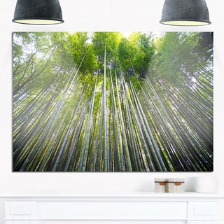 Bamboo forest of Kyoto Japan. - Forest Glossy Metal Wall Art