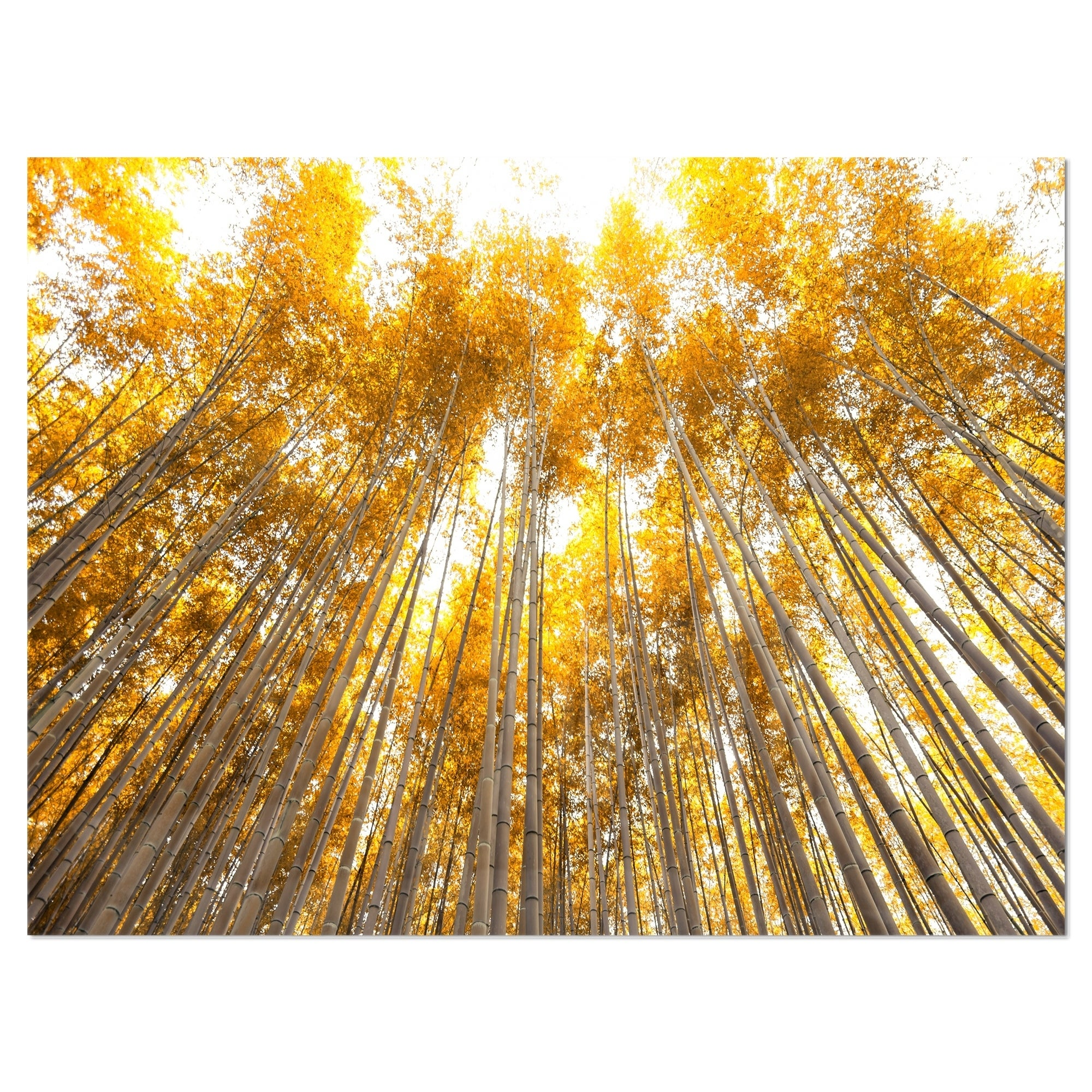Autumn Bamboo Grove in Yellow - Oversized Forest Glossy Metal Wall ...