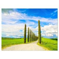 White Road through Cypress Trees - Oversized Landscape Glossy Metal Wall Art