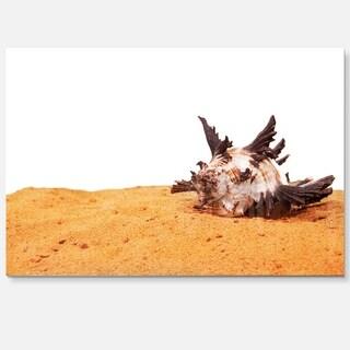 Large Sea Shells on Sand - Seashore Glossy Metal Wall Art