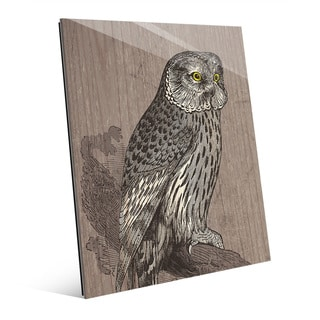 Owl Illustration' Acrylic Wall Art