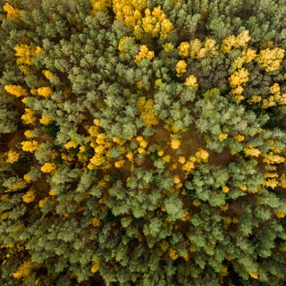 Marmont Hill - 'Yellow and Green Trees' by Karolis Janulis Painting Print on Wrapped Canvas